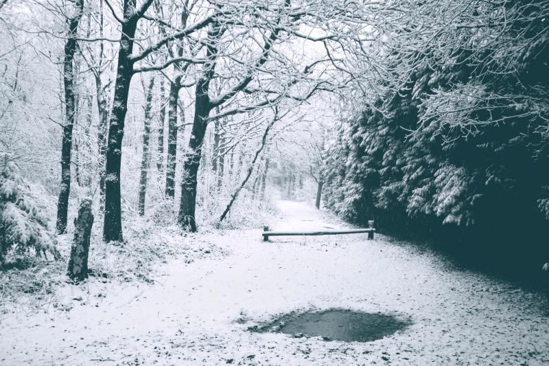 Winterbos.jpg